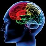 起業の成功確率を高める脳の使い方